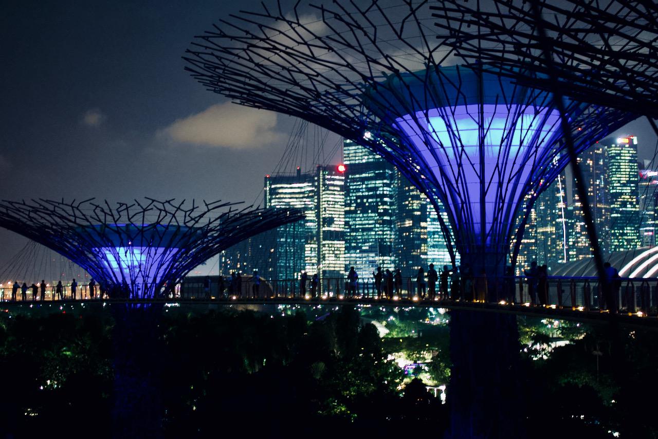 Der Supertree Grove in Singapur bei Nacht